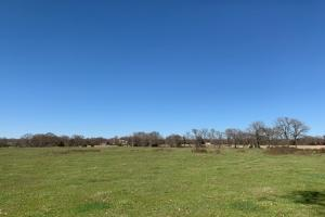 20 acres with mixed trees North of Mabank  (3 of 5)