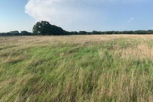 20 Acres North of Mabank, Scenic Pasture Property - Kaufman County TX