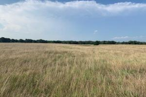 Rich grassland through out the tract in Kaufman County (8 of 8)
