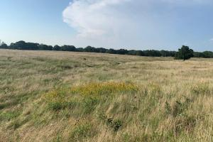20 acres with a gentle rolling terrain in Kaufman County (5 of 8)