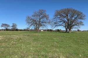 13 ac. surrounded by country views near Mabank  (4 of 5)