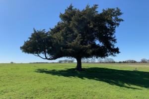 <p>Large cedar on 16 acres North of Mabank&nbsp;</p>