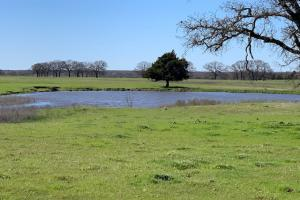 16 Acres Near Mabank with Scattered Trees and a Pond, Great Building Site - Kaufman County TX