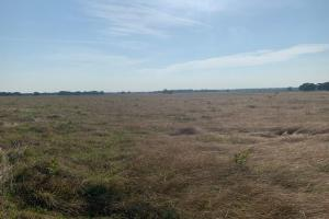 Open pasture on 10 acre tract on FM 90 in Mabank (4 of 6)