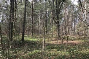 7-Acre Red Barn Road Homesite in Pickens, SC (11 of 15)