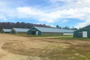 Bowman Chicken Farm - Orangeburg County SC