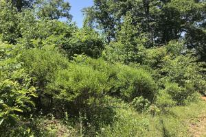 68+/- Acres Wilson Creek Property in Van Buren, AR (15 of 16)