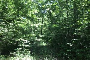 68+/- Acres Wilson Creek Property in Van Buren, AR (3 of 16)