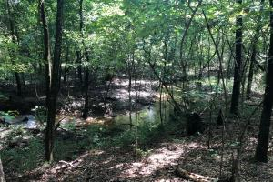 Evergreen Hunting/Timberland Investment in Conecuh, AL (4 of 10)