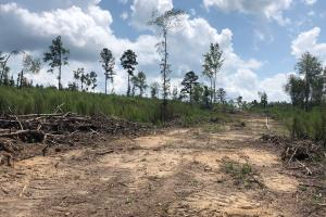 Evergreen Hunting/Timberland Investment in Conecuh, AL (5 of 10)