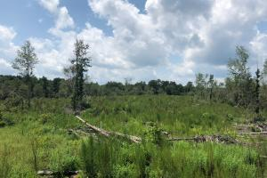 Evergreen Hunting/Timberland Investment in Conecuh, AL (8 of 10)