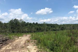 Evergreen Hunting/Timberland Investment in Conecuh, AL (6 of 10)