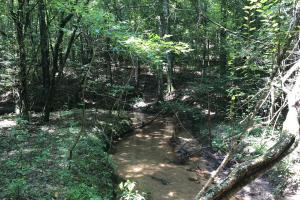 Evergreen Hunting/Timberland Investment in Conecuh, AL (3 of 10)
