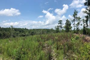 Evergreen Hunting/Timberland Investment in Conecuh, AL (9 of 10)