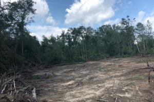 Evergreen Hunting/Timberland Investment in Conecuh, AL (7 of 10)