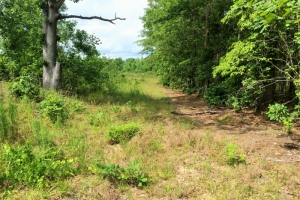 <p>sc recreational land for sale, homesite for sale SC</p>