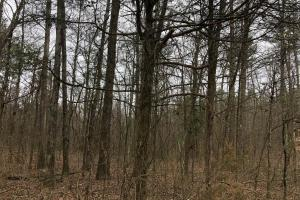 Small Hunting & Timber Tract in Attala, MS (10 of 16)