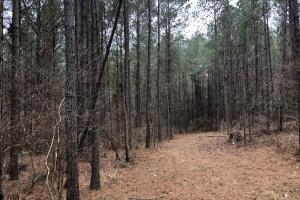 Small Hunting & Timber Tract in Attala, MS (12 of 16)