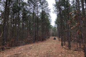 Small Hunting & Timber Tract in Attala, MS (9 of 16)