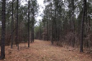 Small Hunting & Timber Tract in Attala, MS (11 of 16)