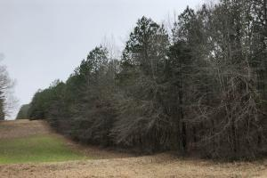 Small Hunting & Timber Tract in Attala, MS (5 of 16)
