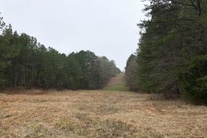 Small Hunting & Timber Tract in Attala, MS (2 of 16)