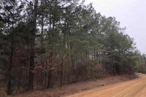Small Hunting & Timber Tract - Attala County MS
