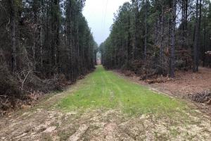 Small Hunting & Timber Tract in Attala, MS (7 of 16)