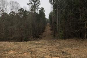 Small Hunting & Timber Tract in Attala, MS (4 of 16)