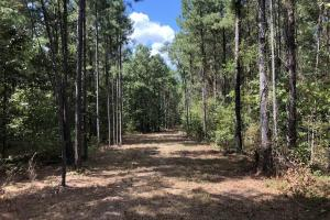 28 Acre Hunting & Timber Tract - Attala County MS