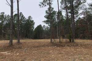 Small Hunting & Timber Tract in Attala, MS (15 of 16)