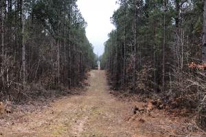 Small Hunting & Timber Tract in Attala, MS (14 of 16)
