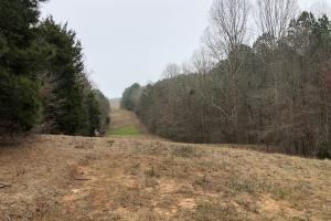 Small Hunting & Timber Tract in Attala, MS (8 of 16)