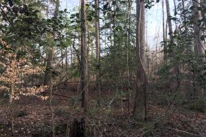 Moonville Wooded Homesite in Greenville, SC (18 of 40)
