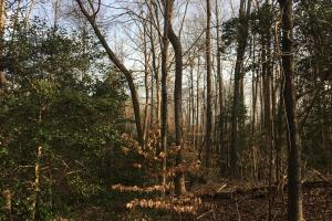 Moonville Wooded Homesite in Greenville, SC (16 of 40)