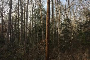 Moonville Wooded Homesite in Greenville, SC (12 of 40)