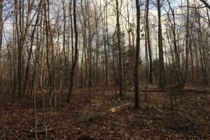 Moonville Wooded Homesite in Greenville, SC (35 of 40)
