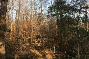 Moonville Wooded Homesite in Greenville, SC (3 of 40)