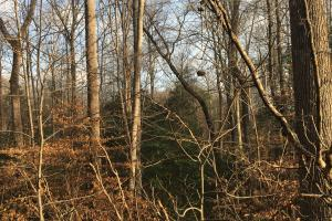 Moonville Wooded Homesite in Greenville, SC (15 of 40)