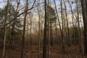Moonville Wooded Homesite in Greenville, SC (37 of 40)