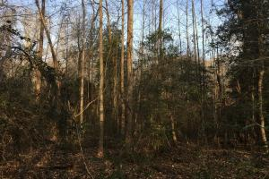 Moonville Wooded Homesite in Greenville, SC (17 of 40)