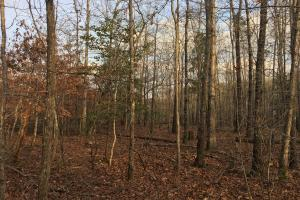 Moonville Wooded Homesite in Greenville, SC (34 of 40)