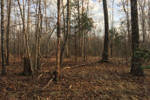 Moonville Wooded Homesite in Greenville, SC (31 of 40)