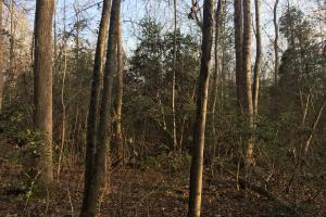 Moonville Wooded Homesite