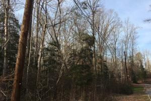 Moonville Wooded Homesite in Greenville, SC (10 of 40)