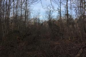 Moonville Wooded Homesite in Greenville, SC (22 of 40)