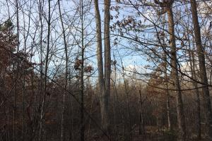 Moonville Wooded Homesite in Greenville, SC (39 of 40)