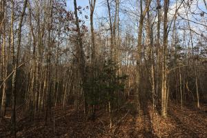 Moonville Wooded Homesite in Greenville, SC (32 of 40)