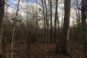 Moonville Wooded Homesite in Greenville, SC (38 of 40)