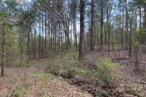 Ballentine Rd in Panola, MS (3 of 10)